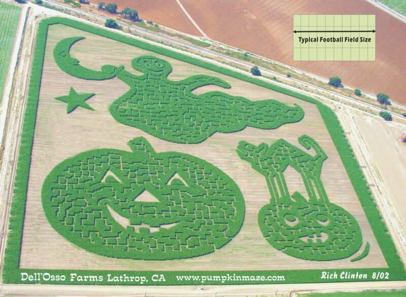 Corn Maze in the Bay Area