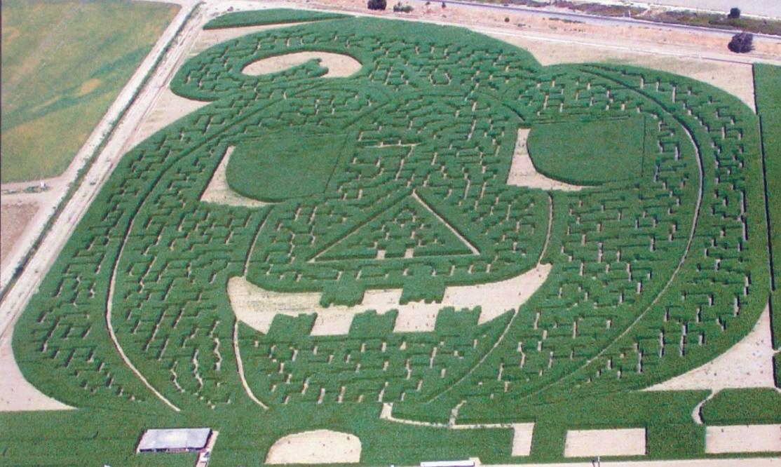 Corn Maze at Dell'Osso Family Farm