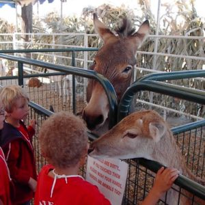 Petting Zoo at the Corn Maze